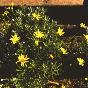 お花(編集後)